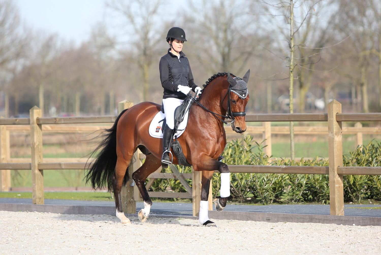 Giovanni WS, Midweek dressuurconcours, Paardensportcentrum Lichtenvoorde
